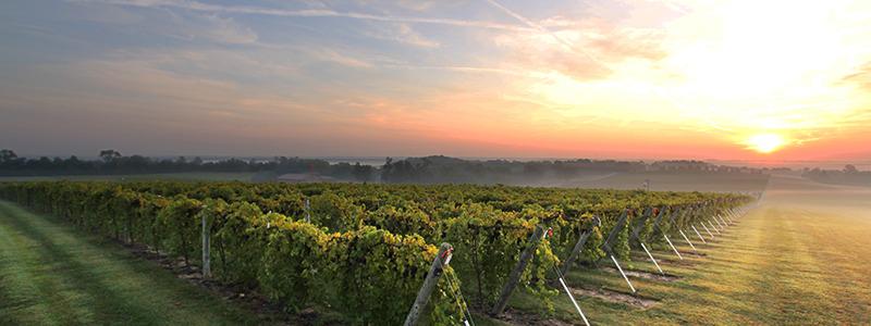 Oliver Winery Creekbend Vineyard_sm