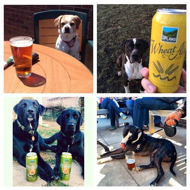 #nationalpuppyday was yesterday... oops. Tap for photo creds #dogsontap #craftbeer #pups